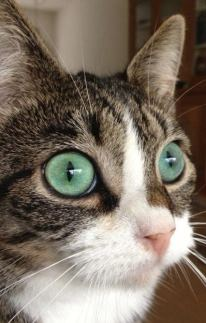 gato_olhos1