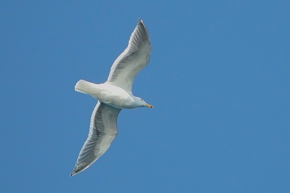 Seagull-7 over the Puget Sound © David Wendel Robinson