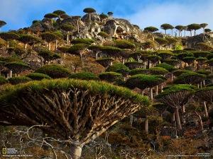Socotra+Yemen_01