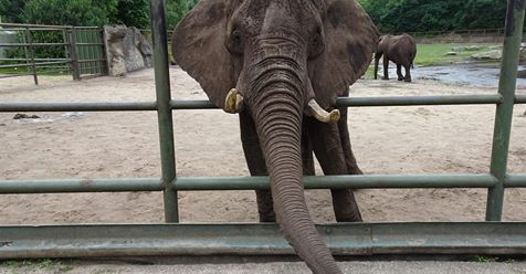 elephant101616