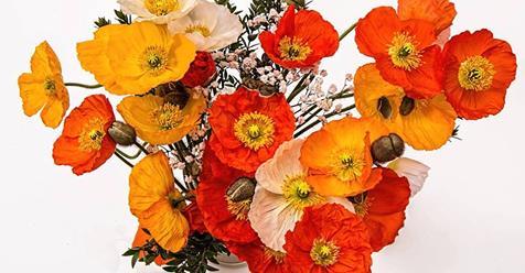 poppies102116