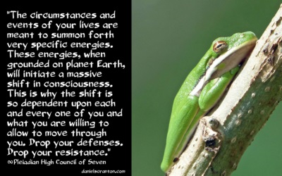 treefrog102916