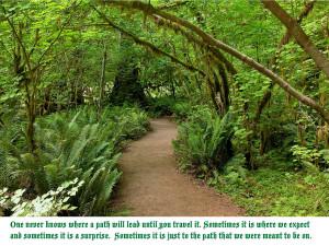 Rain Forest Path